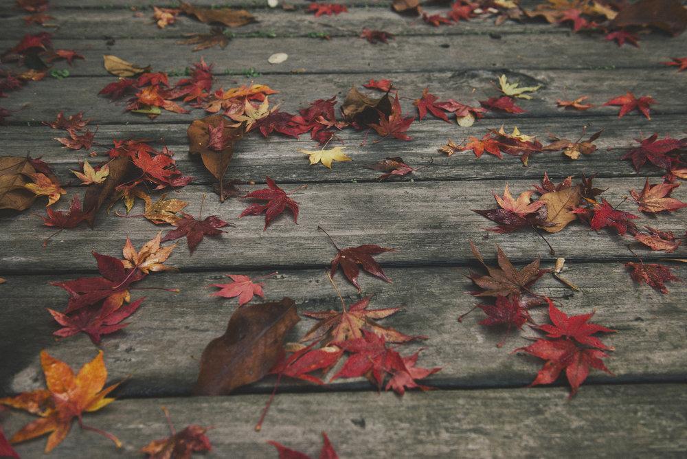 2015_ Fall Color (12).jpg