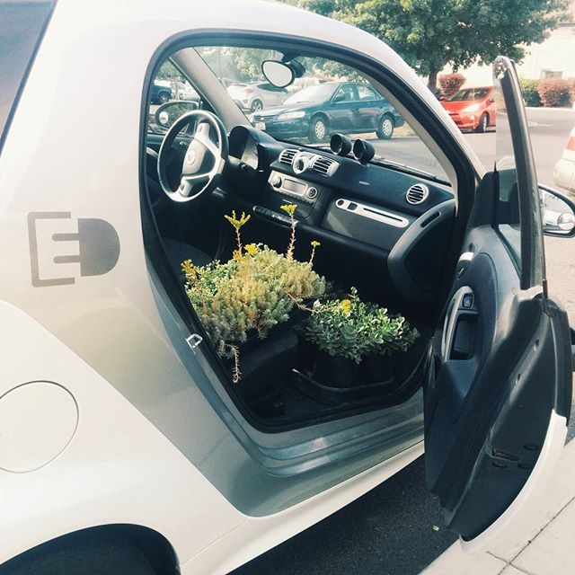At our office, we use electric Smart Cars to get around town.  In a pinch, they can double as a truck.  #sedum, #smartcar, #smartelectricdrive