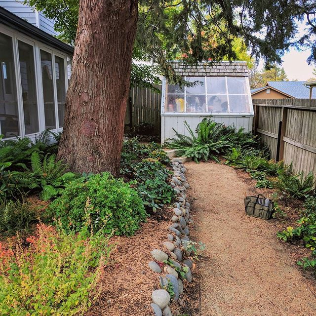 A small #woodlandgarden in a corner of this #cottagegarden makes use of the deep shade and acidic soils beneath a large #juniper.  Also, a cute little #greenhouse.