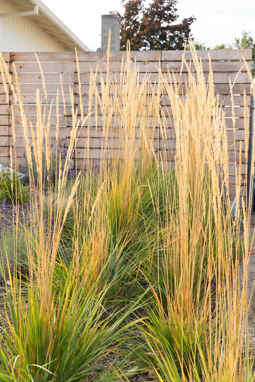 Karl Foerster Feather Reed Grass + Horizontal Slat Privacy Fence