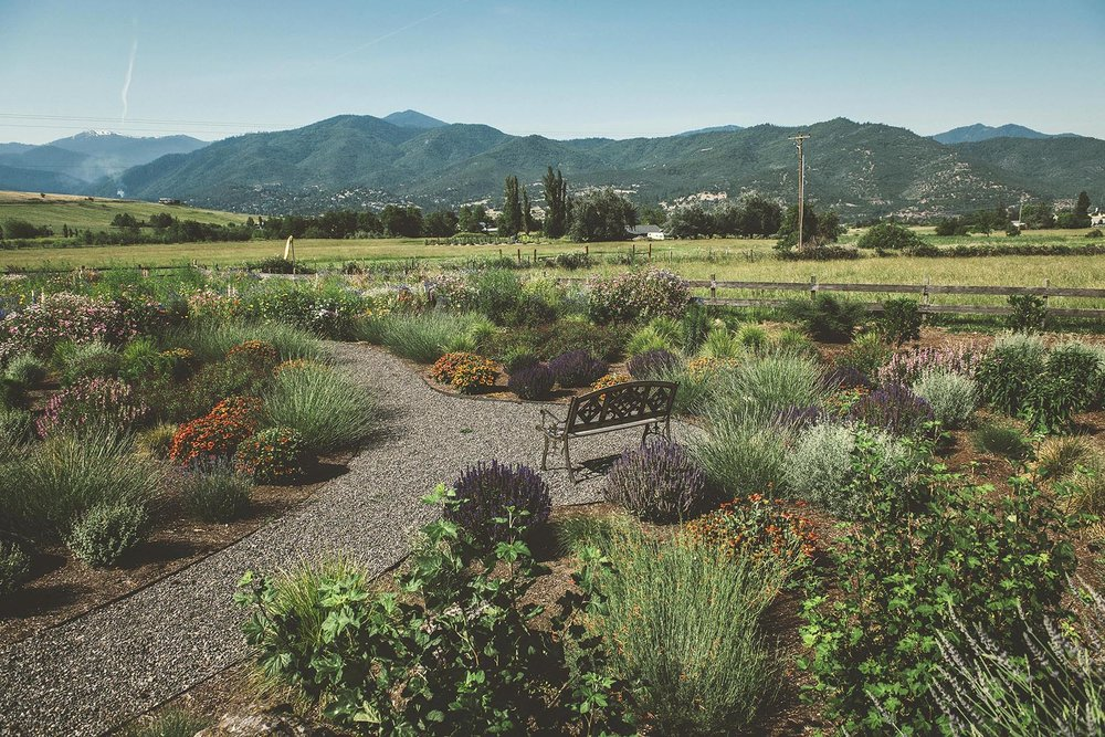 Entrace garden + wildflower meadow + attracts pollinators + bird houses + pollinator hedges + seating bench + lawn replacement + water conservation ideas