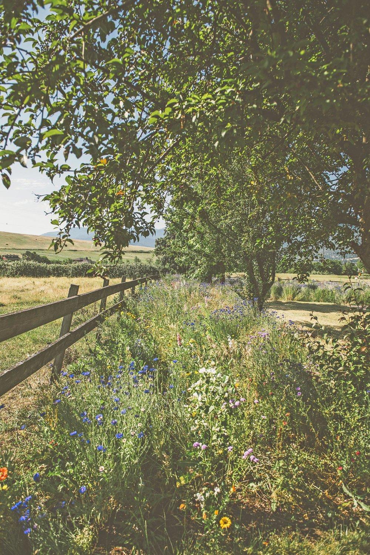 pollinator hedgerow + rustic wooden fence + bird + pollinator shelter + wildflower wild garden man made landscape + ashland hills + pacific northwest meadow