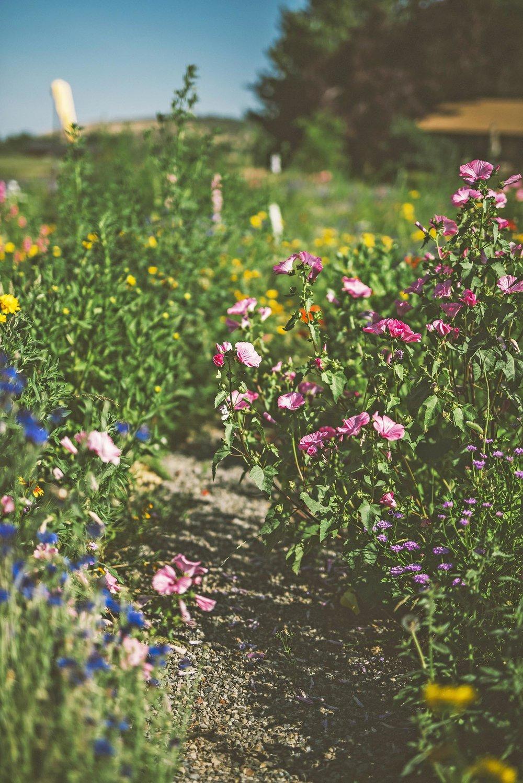garden pathway through bird + butterfly meadow + locally sourced crushed basalt path + deer resistant wildflower meadow