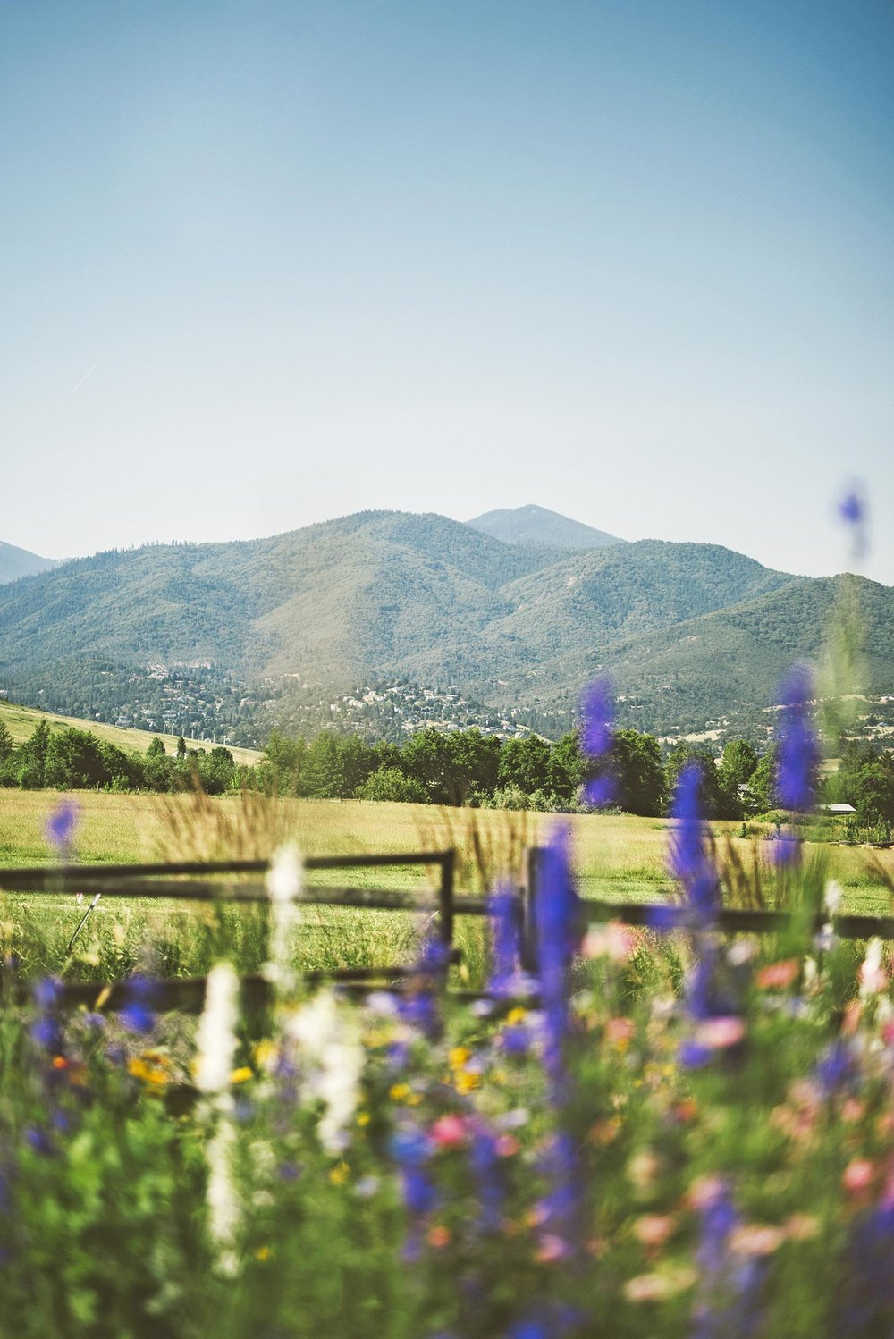Wildflower Garden + Mountain Views + Scenic Water-wise