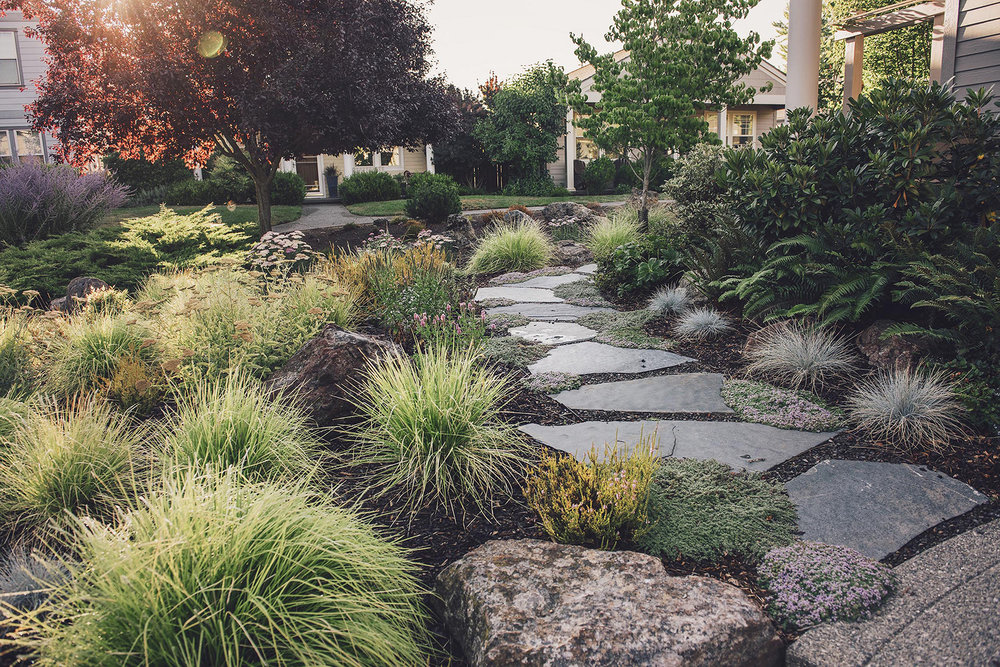 crushed gravel + stepping stone pathway + granite boulder and perennial garden lanscape + bunch grasses + blue sedge + yarrow + heather