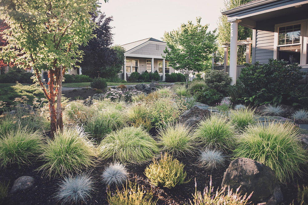 curbside appeal + deer resistant + lawn alternative + modern PNW landscaping drought tolerant + bunch grasses