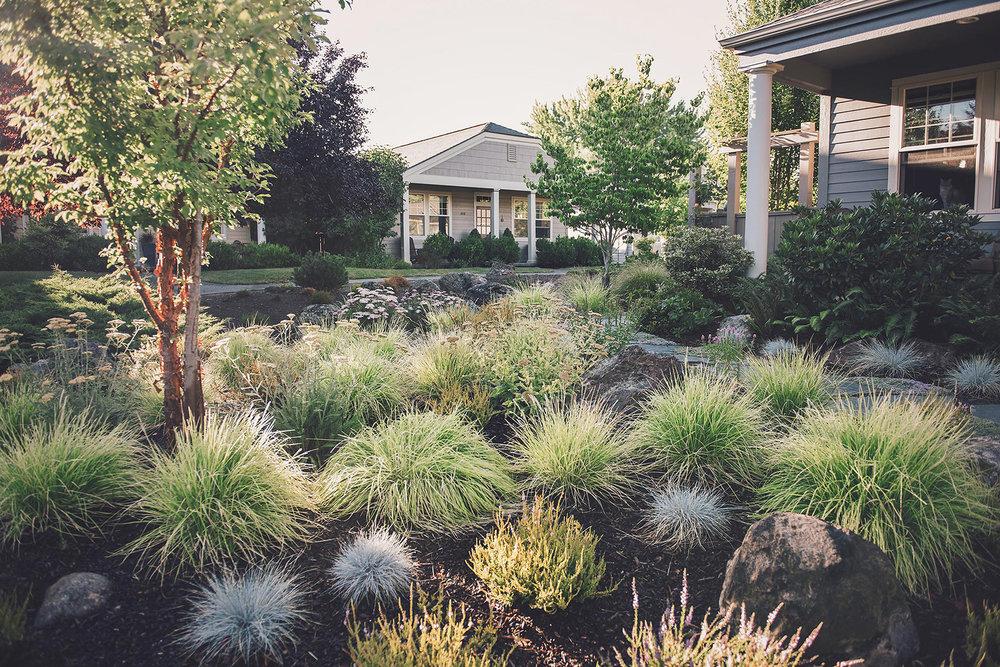 curbside appeal + deer resistant + lawn alternative + modern PNW landscaping drought tolerant + bunch grasses