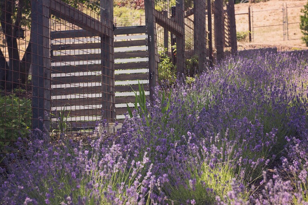 deer fence + gate + juniper posts + steel wire mesh + lavender pasture + sustainable pasture garden + drought tolerant + deer resistant perennials