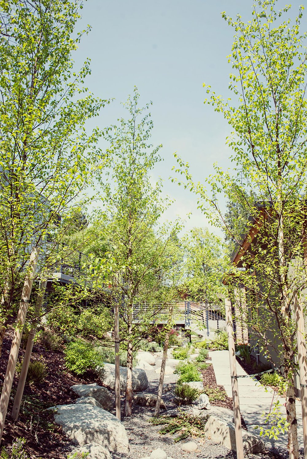 Rive birch + seasonal sustainable man made crushed gravel + granite boulder creek bed + segmented concrete pathways + concrete + steel stairs and brid
