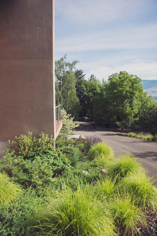 autumn moore grass + heathers + bunch grasses + salvia + lush perennial deer resistant garden + modern pacific northwest landscaping