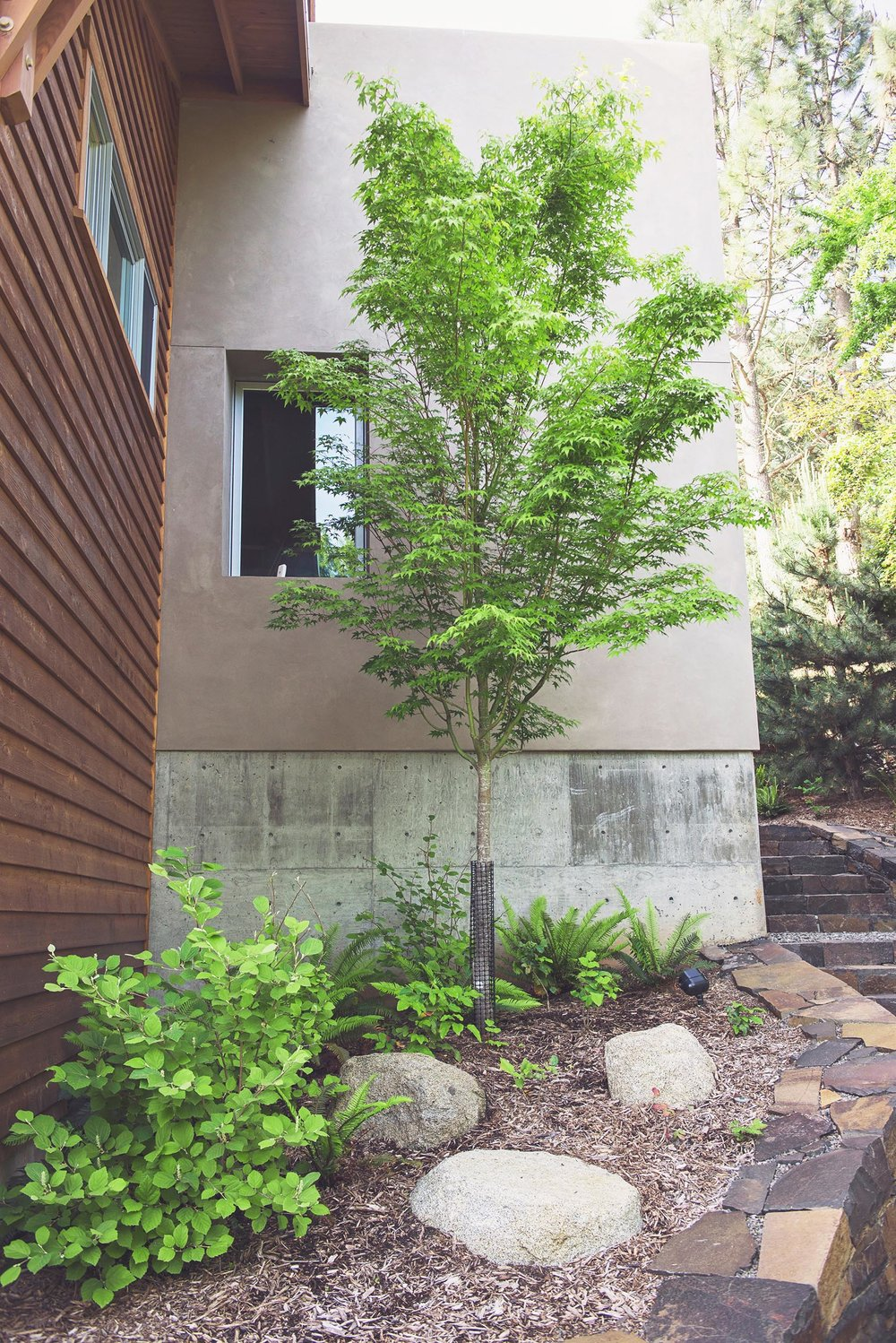Mountain maple + placed granite boulders + ferns + stacked basalt retaining wall + stairs + modern landscaping