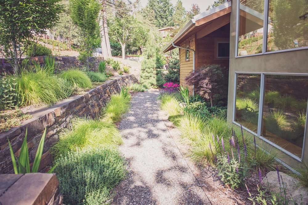 Terraced perennial garden + stacked basalt rock wall + rhododendron + south facing windows + salvia + japanesen maple + bunch grasses