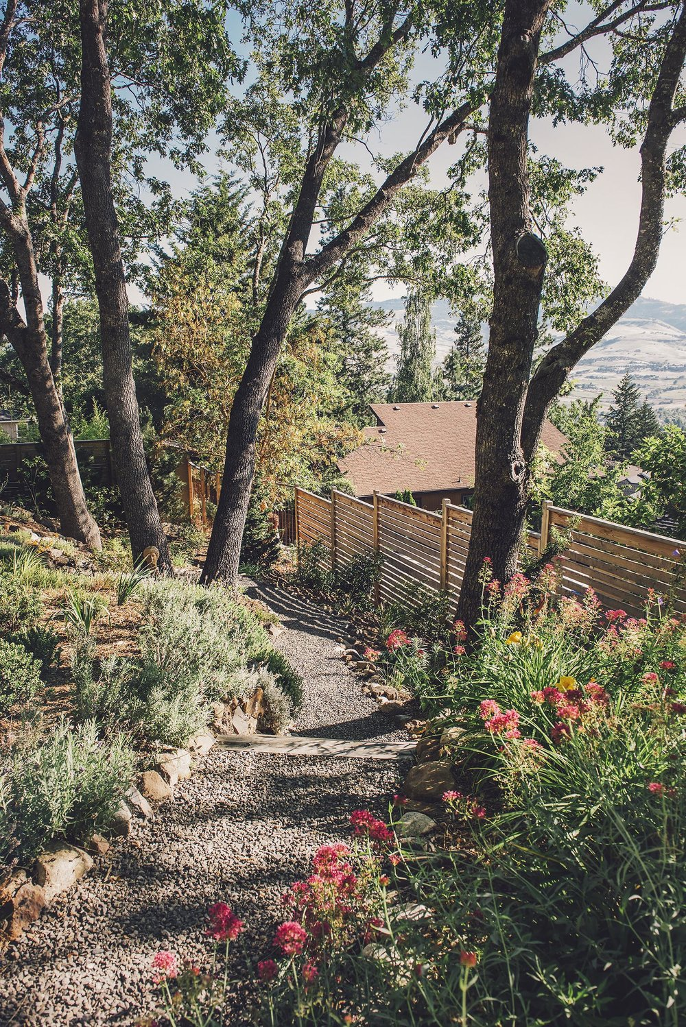 Above timber and crushed basalt gravel locally quarried steps + cobble path + jupiter's beard pollinator perennial garden + modern slatted wood fence