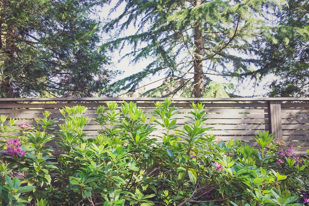 privacy fenceence + Azalea + pacific northwest fence + landscaping