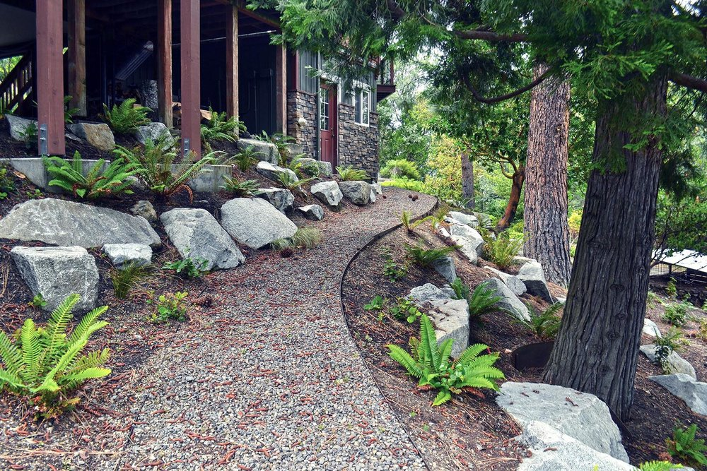 Gravel Pathway Through Native Conifers + Understory Ferns + Granite Boulders