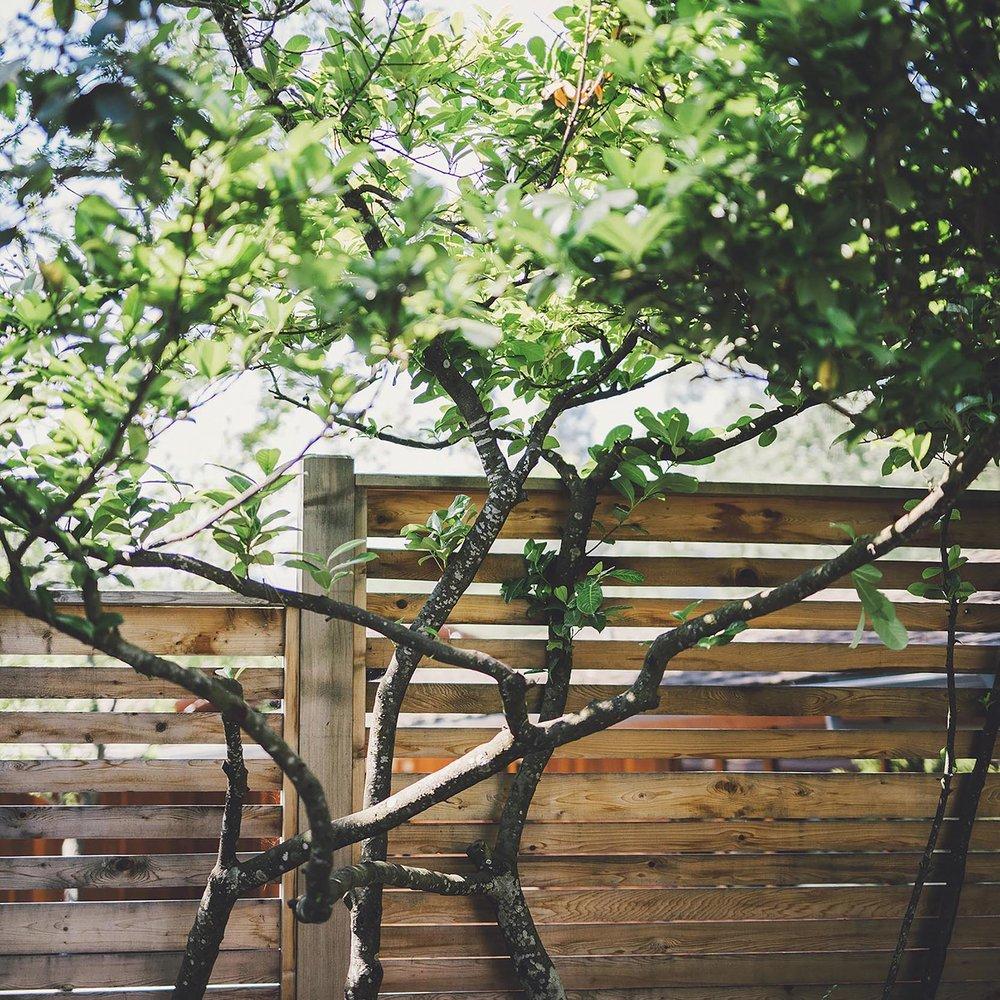 Horizontal Privacy Fence + Cedar