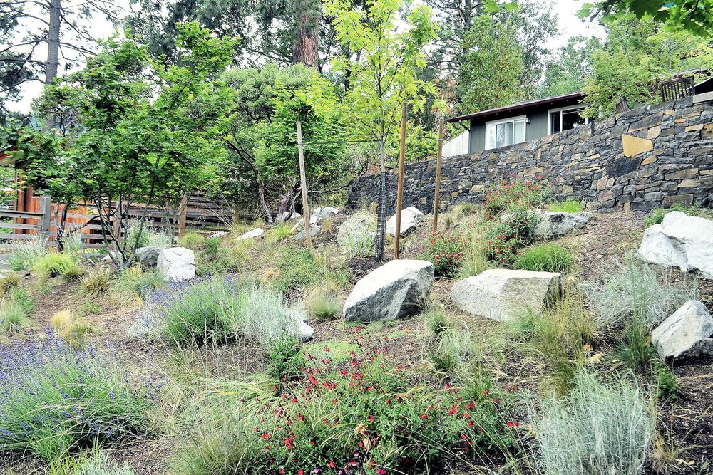 Oregon Grape Manzanita Iris and Fescue Slope with View of Timber Steps + Wall