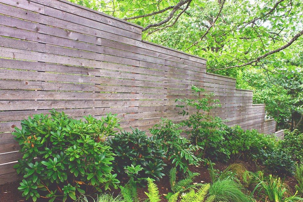 Horizontal Slat Privacy Fence + Deer Resistant Perennial Garden + Bunch Grasses + Peonies + Rhododendron  + Cedar + Western Sword Fern