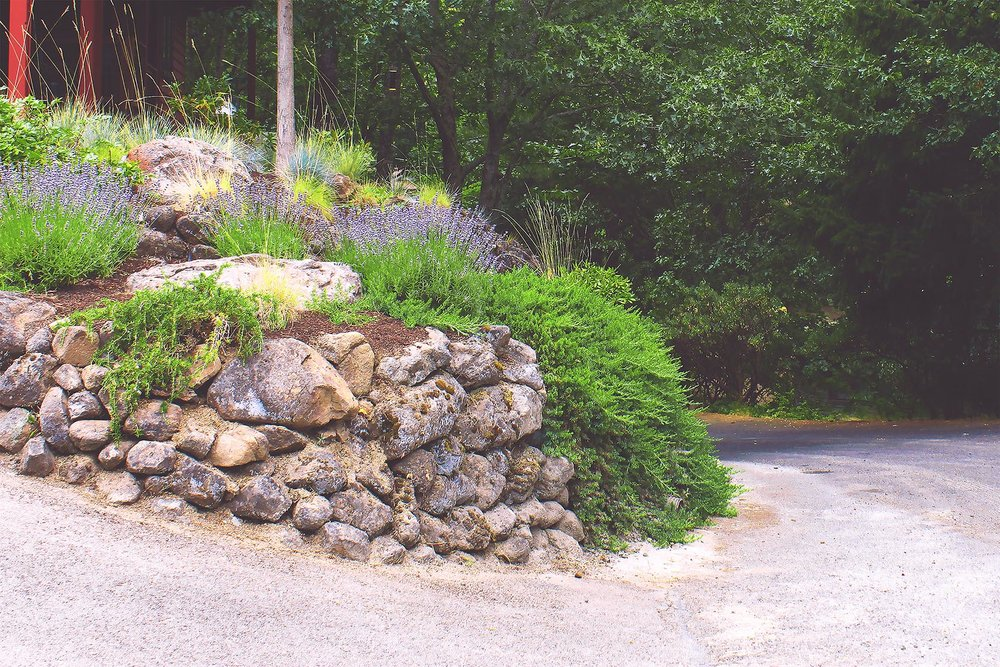 Rock Walls + Driveway Edge + Drought Tolerant Plants + Creeping Rosemary + Lavender + Bunch Grasses