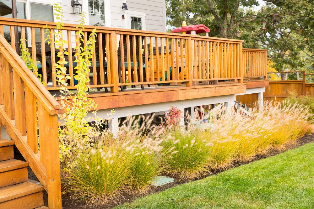 Dwarf Fountain Grass Border + Deck + Back Yard + Lawn