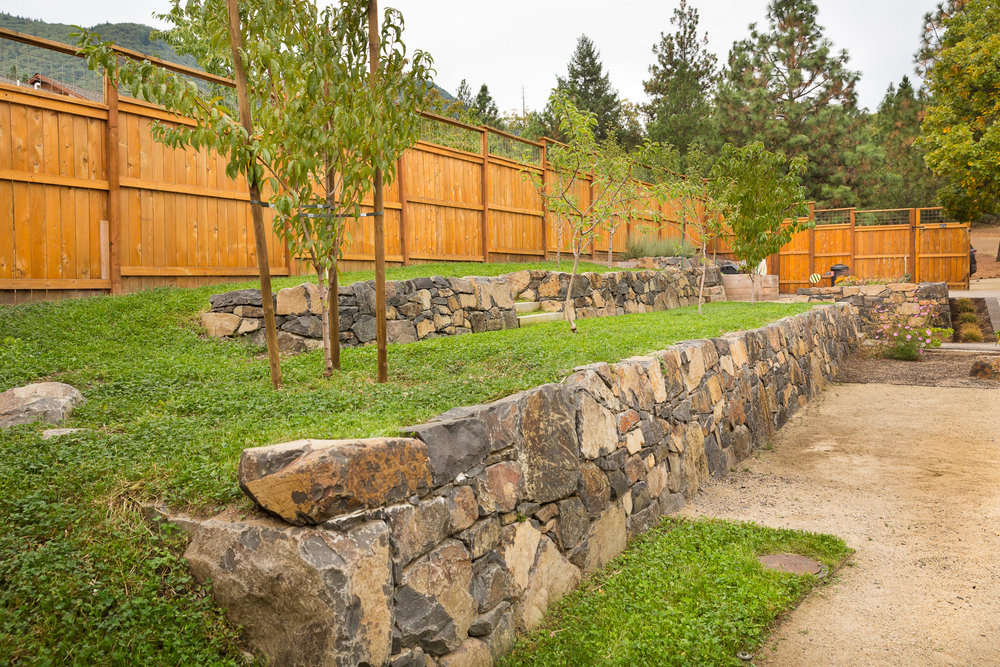 Fruit trees + meadow understory + clover soil building + terraced orchard