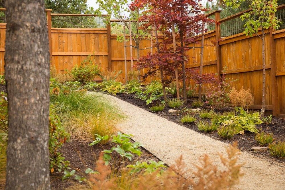 A low-maintenance woodland garden sits beneath an Oak tree, Flowering Dogwoods + a 'Burgundy Lace' Japanese Maple.