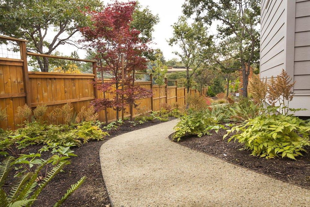 Decomposed Granite Path + Astilbe + Japanese Maple