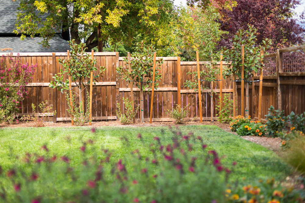 Cedar 6' Privacy Fence + Eco-Lawn + Little Gem Magnolia + Urban Back Yard