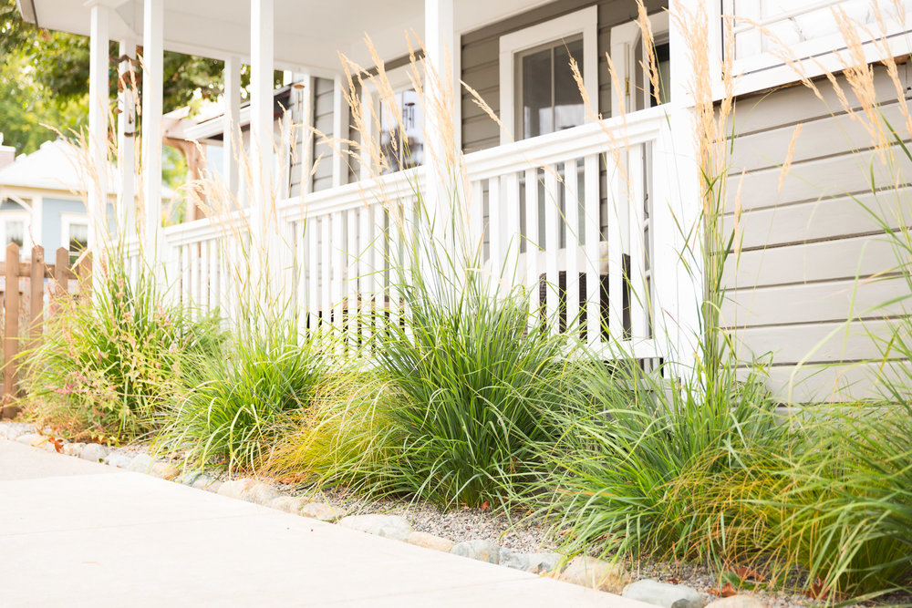 Sidewalk Garden + Street-Side Interest + Drought-Tolerant Perennials + Feather Reed Grass
