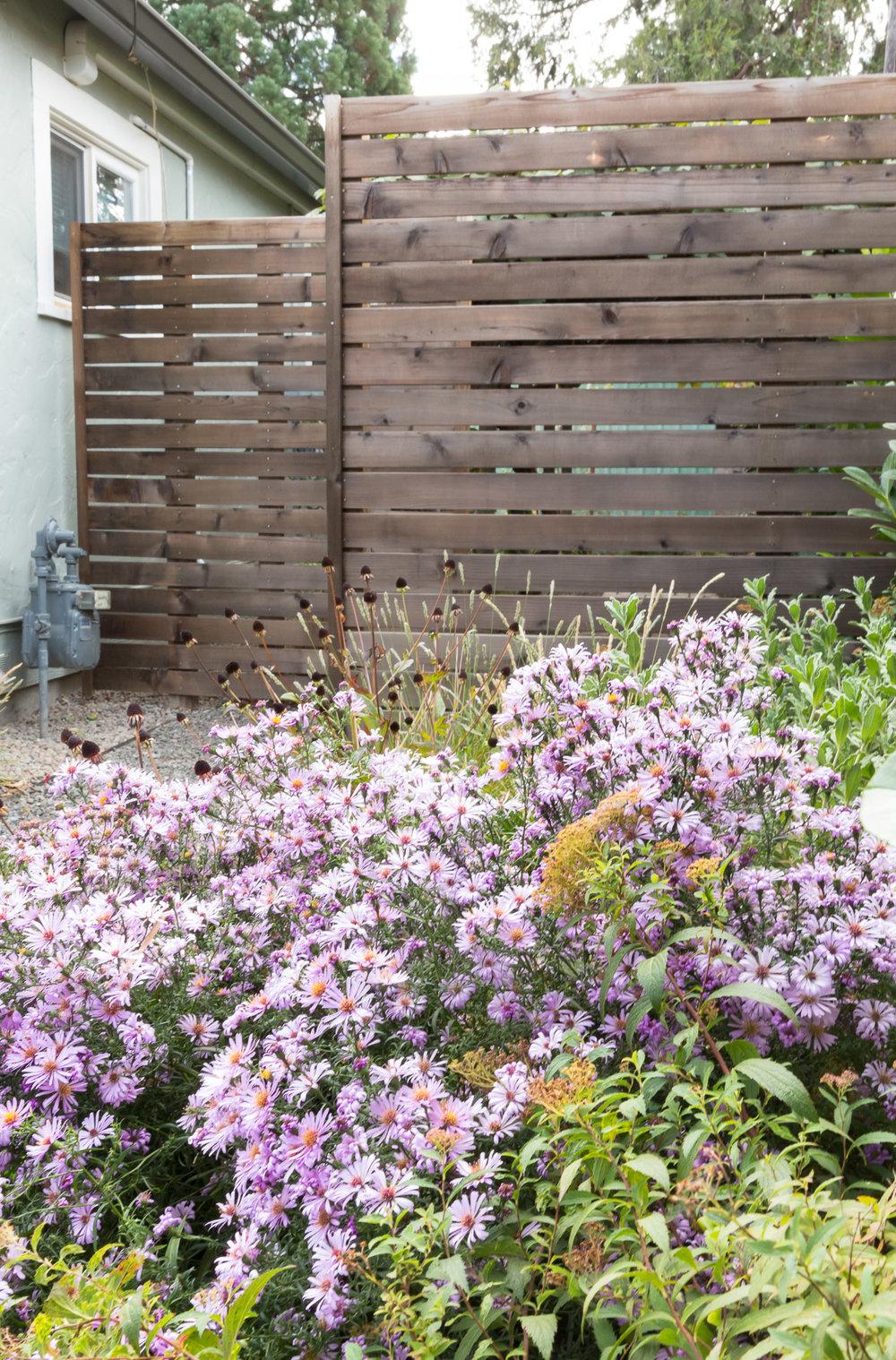 Blooming Aster + Cedar Privacy Screens