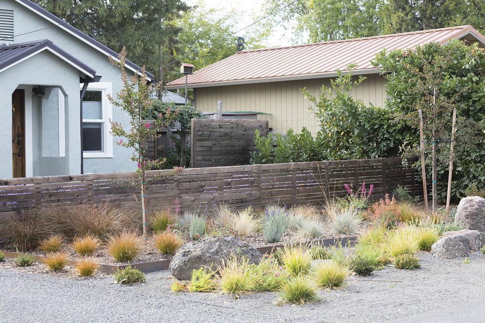 Drought-tolerant front yard + modern short slat fence