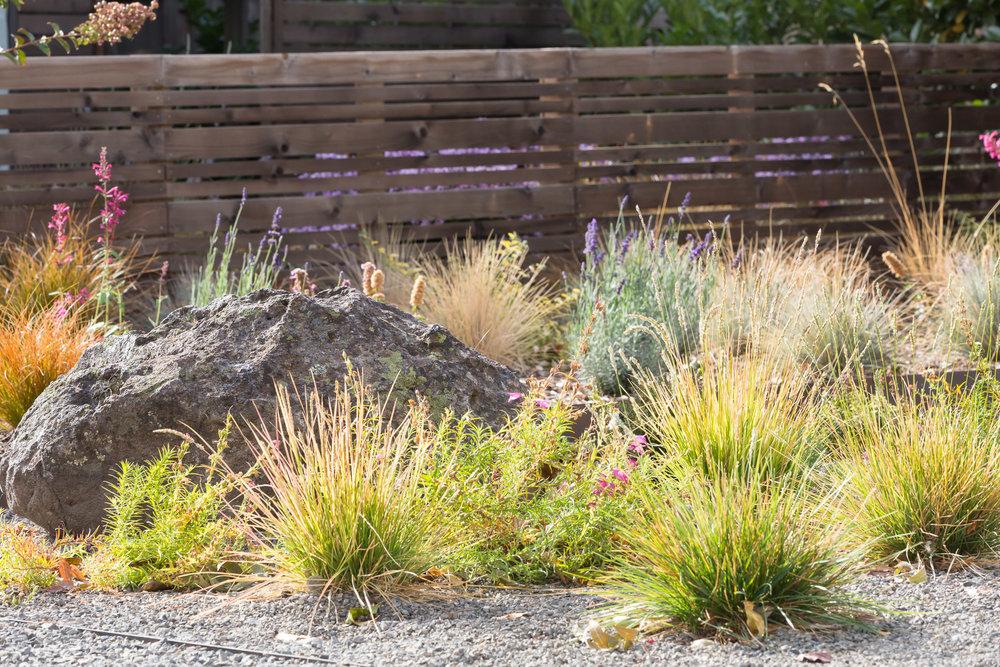 Drought-Tolerant Garden + Modern Fencing