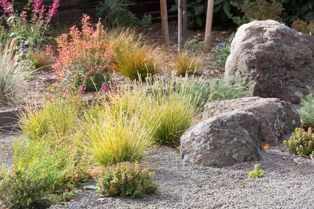 Drought-tolerant Garden + Moss Rocks
