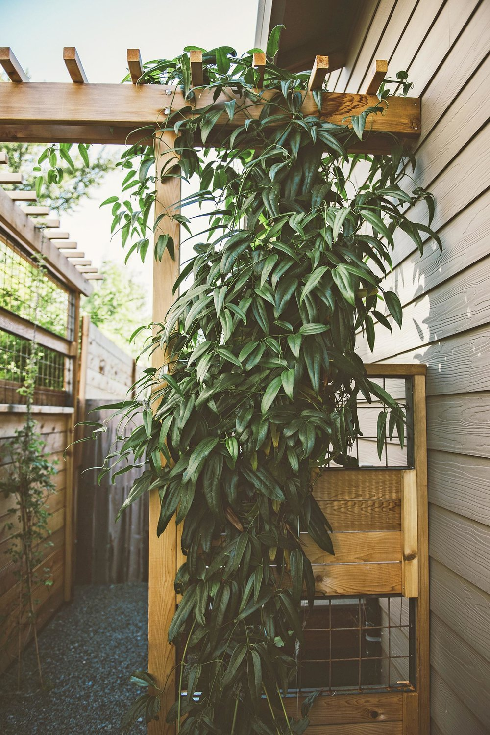 Craftsman-Style Cedar Vine Arbor + Side Yard Walkway