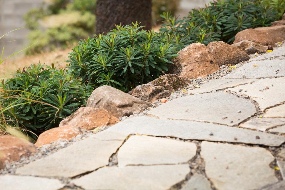 Loose-fit flagstone pathway + cobblestone border + Blackbird Spurge