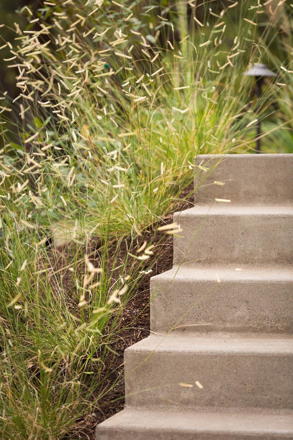 Modern Sand Finished Concrete Steps + Blue Grama Grass