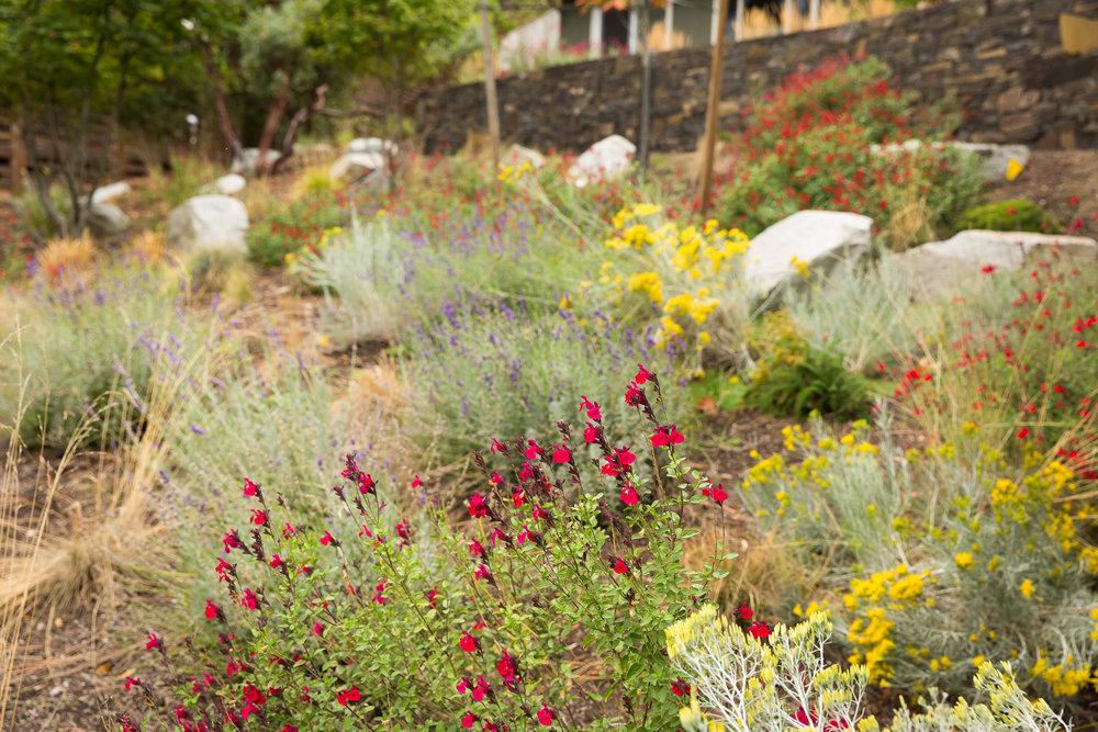 Deer-Resistant Hillside Pollinator Garden + Perennials