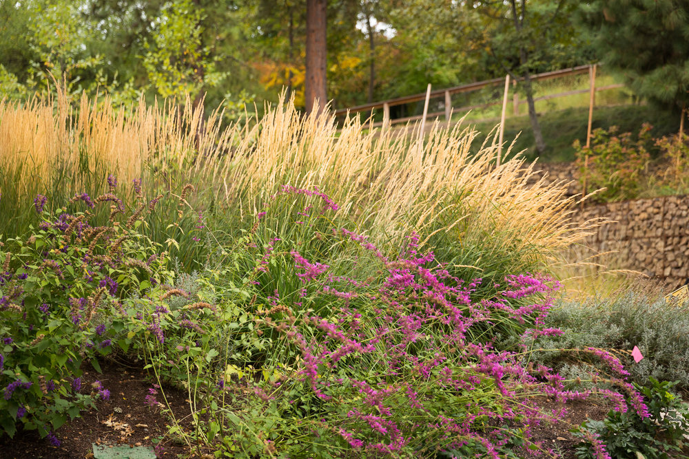 Drought-Tolerant Pollinator Entrance + Karl Foerster Feather Reed Grass + Driveway Island