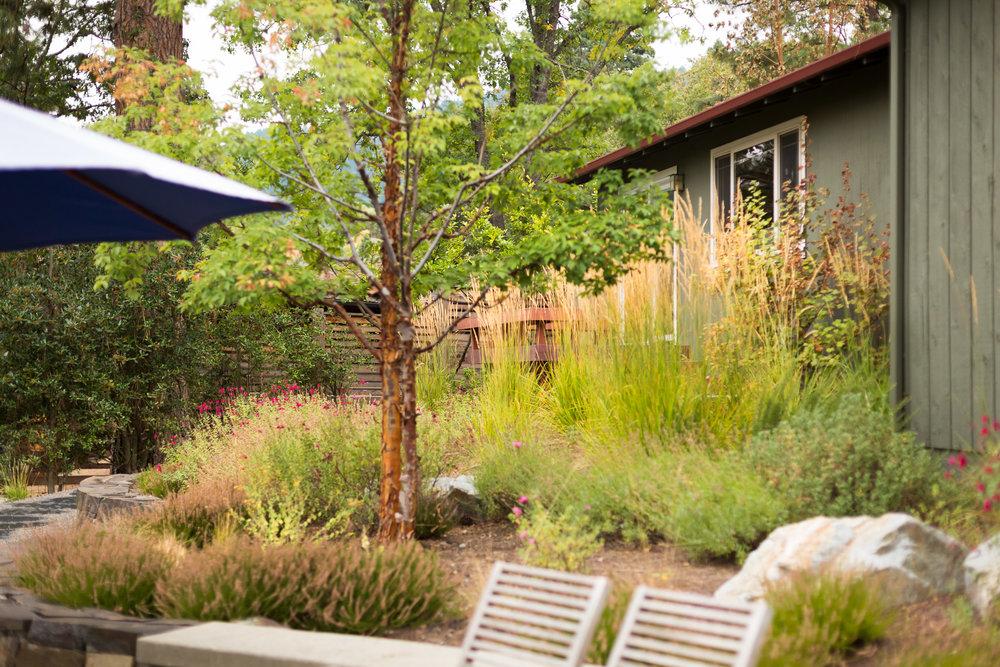 Karl Foerster Feather Reed Grass + Fall Perennials