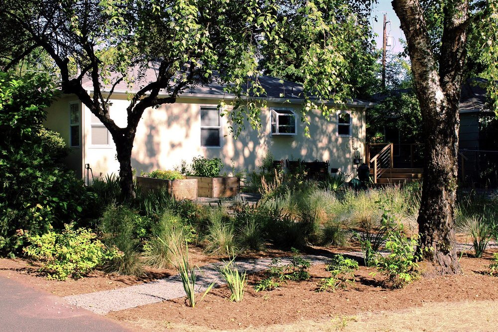 Gravel Pathway + Mixed Perennial Garden + Drought + Shade Tolerant + Pollinator Friendly + Backyard