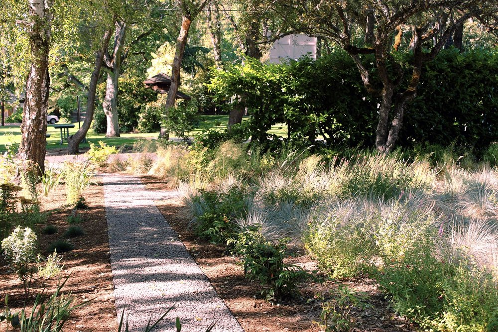 Gravel Pathway + Mixed Grasses + Sedge + Sage + Drought Shade Tolerant + Perennial Garden + Pollinator Friendly + Low-maintenance