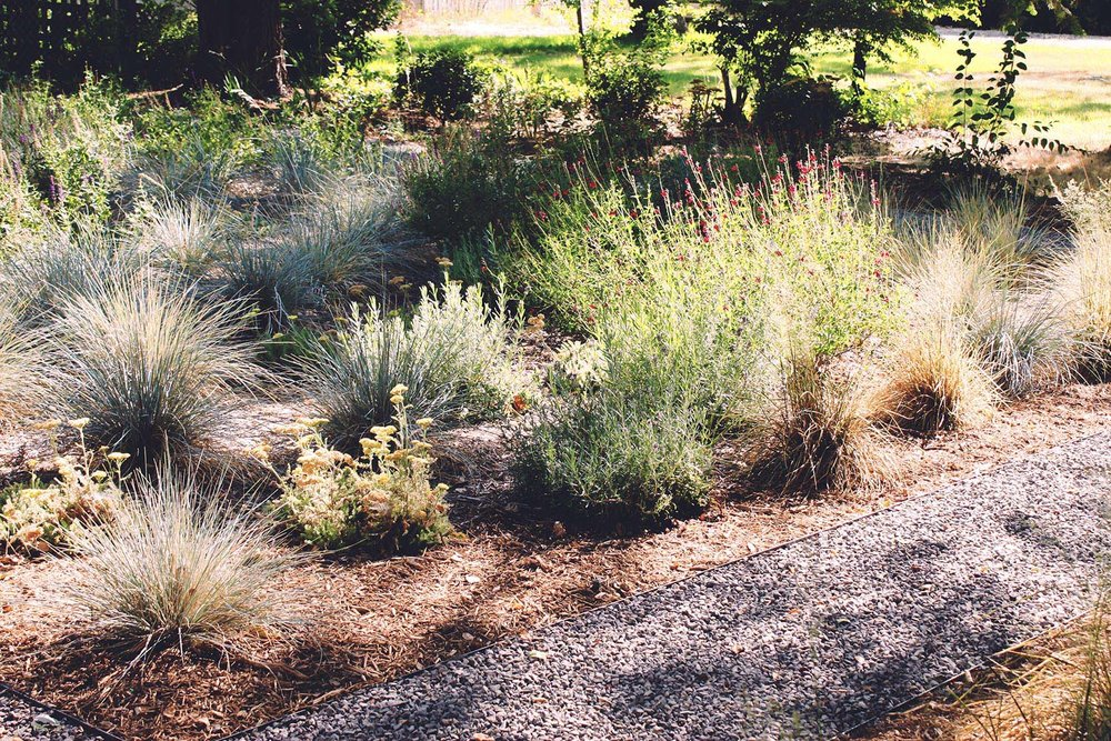 Crushed gravel pathway + Low-maitetnance Garden + Drought + Shade Tolerant + Pollinator + Blue Oat Grass + Bronze Sedge + Yarrow + Sage