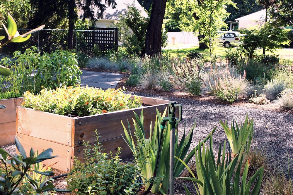 Garden Scene + Backyard + Cedar Raised Bed + Rhododendron + Iris + Giant Hyssop + Flagstone + Gravel Patio + Shade + Drought Tolerant Plants