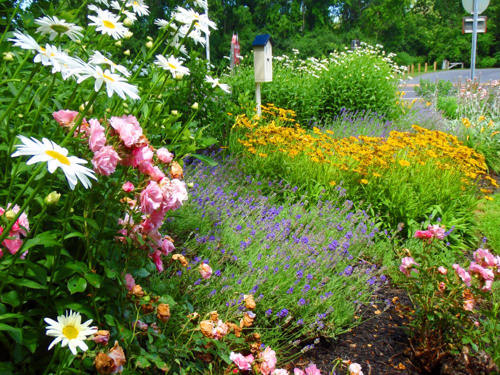 OLP-Butterfly-Garden-1.jpg