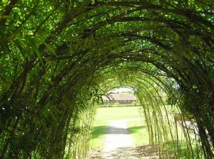 living-willow-tunnel-300x224.jpg