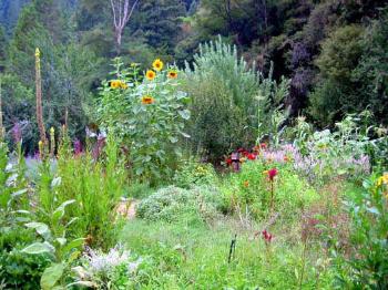 Permaculture-Garden.jpg