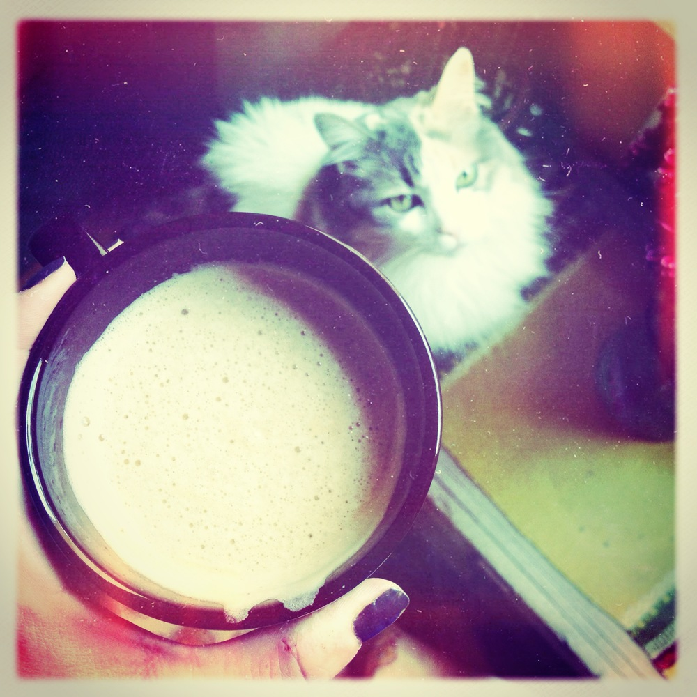 bella cat and coffee.JPG