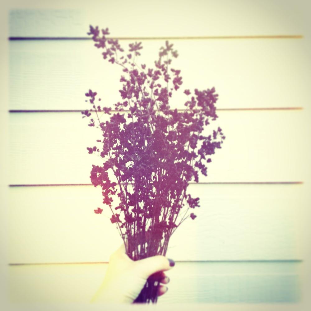 dried oregano herbs.JPG