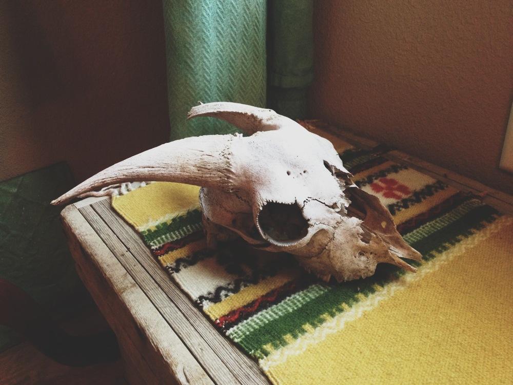 goat skull.JPG