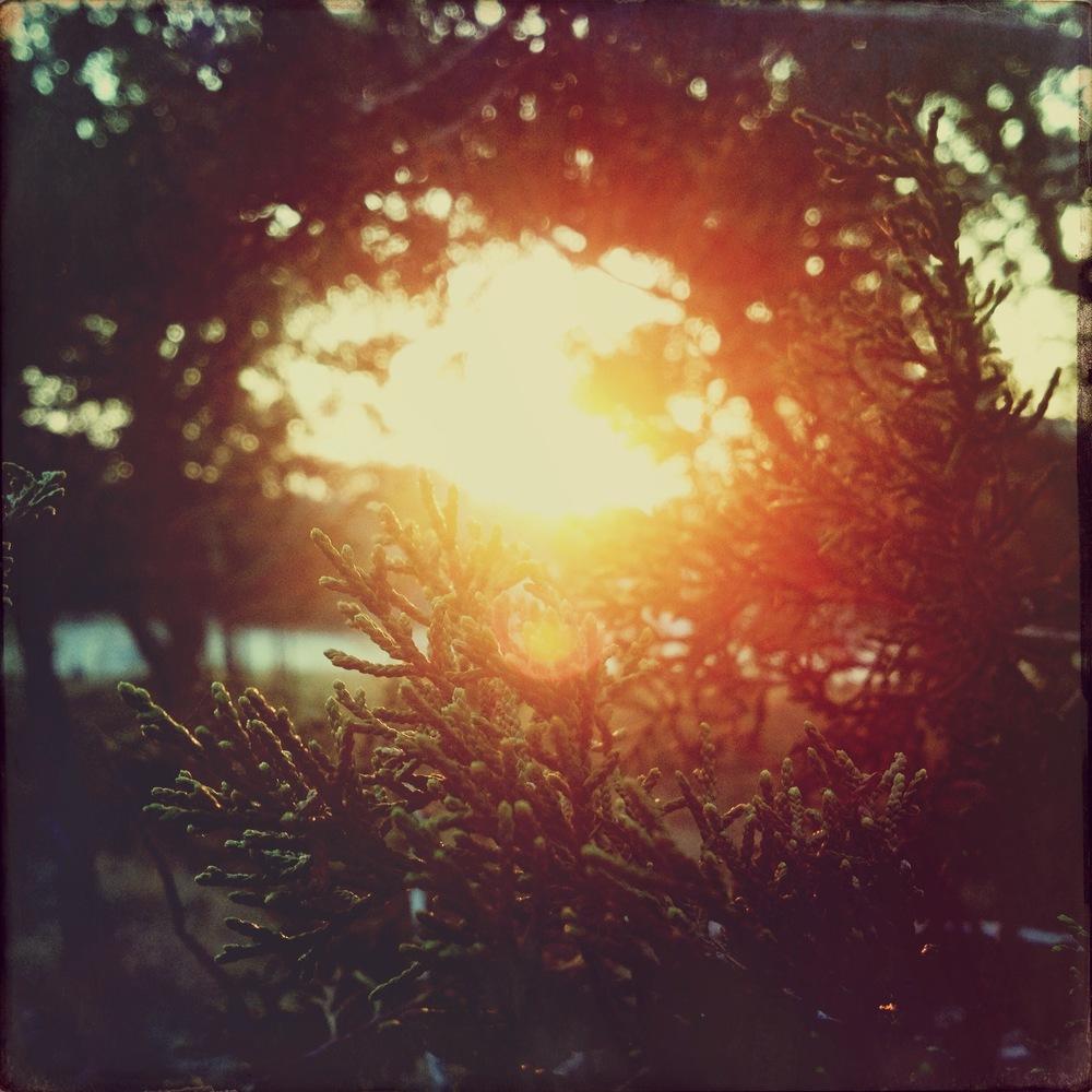 sunset through the trees.JPG